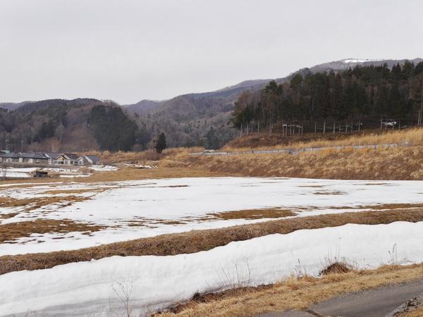 2月28日(水)の高嶺