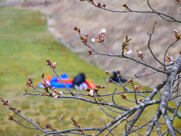4月23日(木)の高嶺