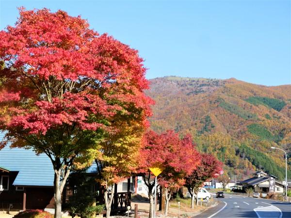 11月3日(火-祝)の高嶺