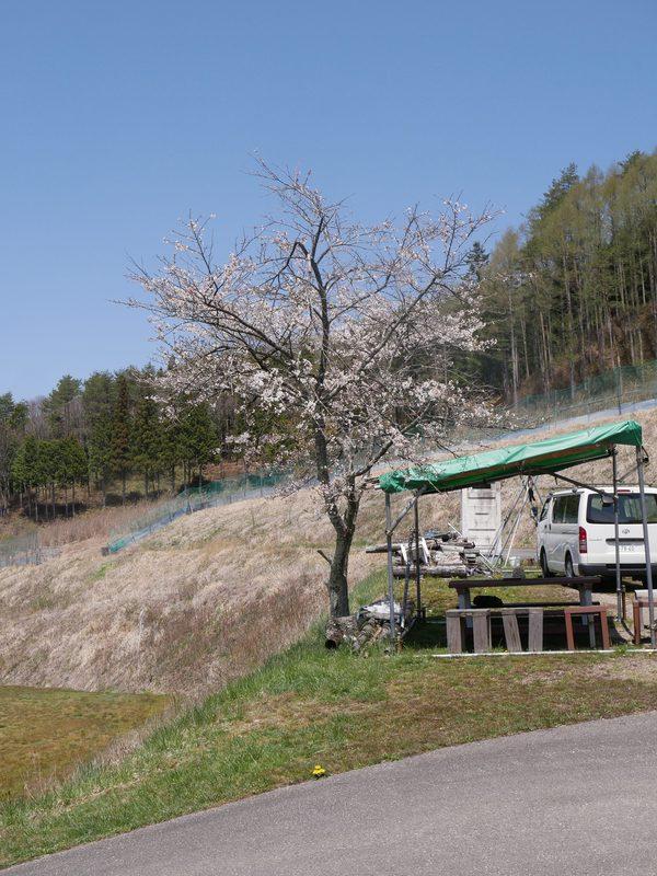 4月20日(火)の高嶺